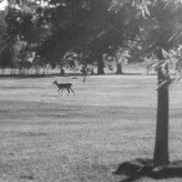 Photo taken at Lamar Park-Lake Patsy by Sheena E. on 6/26/2012