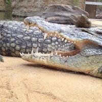 Das Foto wurde bei Kölner Zoo von Rainer K. am 8/25/2012 aufgenommen