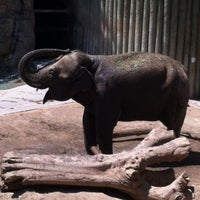Photo taken at Fresno Chaffee Zoo by Heather H. on 5/31/2012