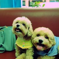 Photo taken at Thonglor Pet Hospital by Hao W. on 9/1/2012
