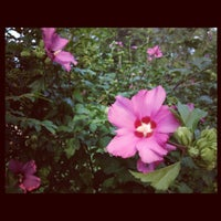 Photo taken at Bessie Branham Park by Patricia Kalmeijer, Realtor (. on 6/30/2012