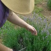 Photo taken at Lavendar Ridge Farms by Cassie on 6/16/2012