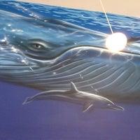 3/18/2012 tarihinde Martin F.ziyaretçi tarafından Blue Whale'de çekilen fotoğraf