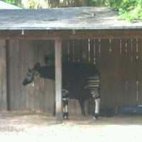 Photo taken at Okapi Exhibit by Bob G. on 4/1/2012