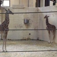 Photo taken at Giraffe Complex by Kailen S. on 4/22/2012