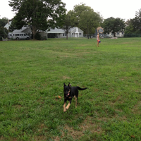 Photo taken at Hawthorn St Dog Park by A Dog On Dogbook on 8/11/2012