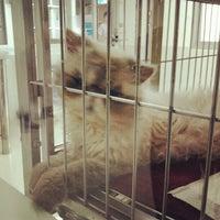 Photo taken at Thonglor Pet Hospital by WORi7 on 4/24/2012
