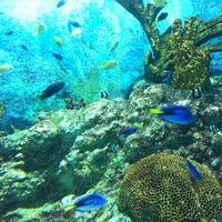 Photo taken at COEX Aquarium by Hyunkyung K. on 7/15/2012