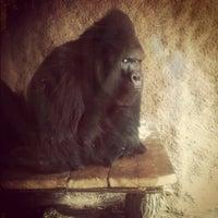 Photo taken at Pavilon goril by Ellie on 9/13/2012