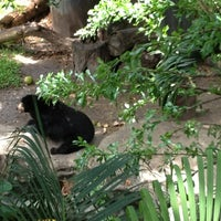 Photo taken at Dusit Zoo by Weejane on 6/29/2012