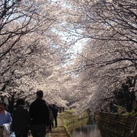 Photo taken at 千本桜 by maemo m. on 4/8/2012