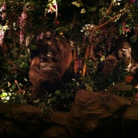 Photo taken at Rainforest Cafe by Mary N. on 9/8/2012