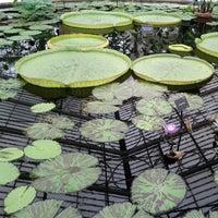 5/6/2012 tarihinde Matt B.ziyaretçi tarafından Royal Botanic Gardens'de çekilen fotoğraf