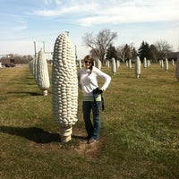 Photo taken at Field of Corn (with Osage Orange Trees) by Malcolm Cochran by Christy H. on 3/7/2012