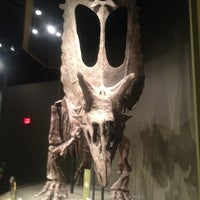 Photo taken at Sam Noble Oklahoma Museum of Natural History by Debbie L. on 3/16/2012