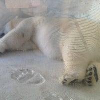 6/22/2012 tarihinde Mauricette R.ziyaretçi tarafından Wild Arctic'de çekilen fotoğraf