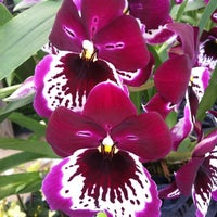 ... Photo Taken At Atlantic Avenue Orchid U0026amp;amp; Garden By Joy On 3/ ...