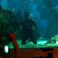 Photo taken at Coral Reef Restaurant by Mark B. on 4/13/2012