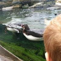 Photo taken at Penguin Exhibit by Paul on 5/28/2012