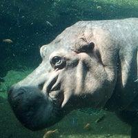 Photo taken at San Antonio Zoo by Justin S. on 2/20/2012