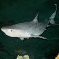 Photo taken at Shark Reef Aquarium by Eric S. on 6/20/2012