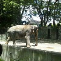 Photo taken at Inokashira Park Zoo by zaskar277 on 6/10/2012