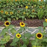 Das Foto wurde bei Sunflower Garden von Adeleine I. am 9/11/2012 aufgenommen