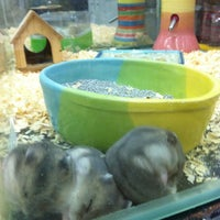 Photo taken at Qian Hu Pet Shop by Grangmother on 8/18/2012