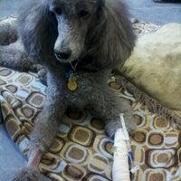 Photo taken at Massachusetts Veterinary Referral Hospital by Marie L. on 3/27/2012