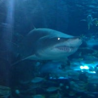 Photo taken at Ripley's Aquarium by Seth C. on 2/23/2012