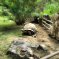 Photo taken at Tulsa Zoo by Jory C. on 8/14/2012