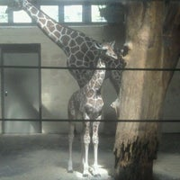 Photo taken at Giraffe Complex by Kelsey G. on 4/10/2012