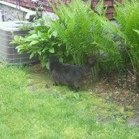 Photo taken at Black Cat Spotting by Chloe E. on 5/6/2012