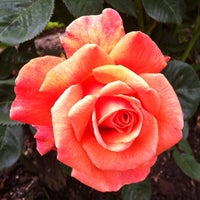 Photo taken at International Rose Test Garden by Tyler H. on 5/27/2012