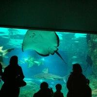 Photo taken at COEX Aquarium by gene l. on 2/18/2012