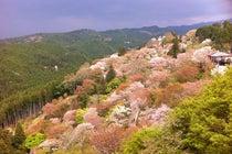 吉野山 下千本