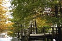 都市緑化植物園(グリーンピア春日井)
