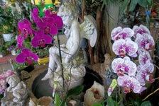 Cypress Florist