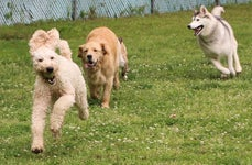 Happy Dogs Boarding and Training