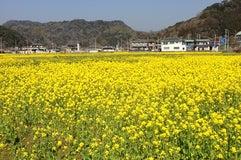 道の駅 下賀茂温泉 湯の花