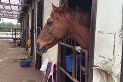 オリンピッククラブ 宝馬乗馬学校
