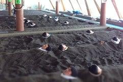 砂むし会館 砂楽