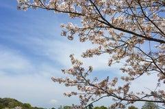 静岡市清水日本平運動公園