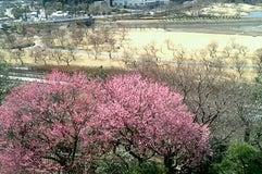 偕楽園公園(四季の原)
