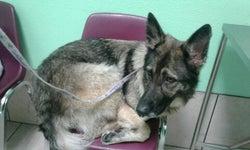 Grantline Veterinary