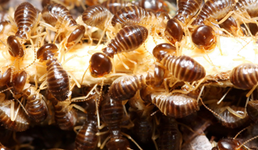 United Pest Control Co., Inc.