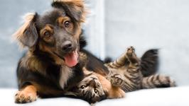 Rathdrum Animal Clinic