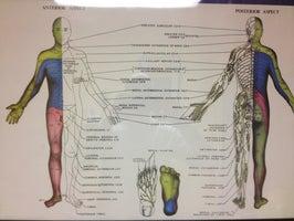 C2M Chiropractic