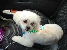 Bone-afide  Pet Grooming, Inc.