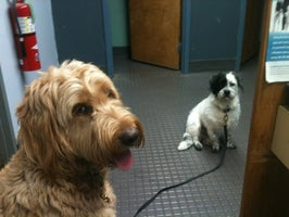 Sedille's Pet Grooming